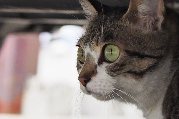 Sakura big eyes