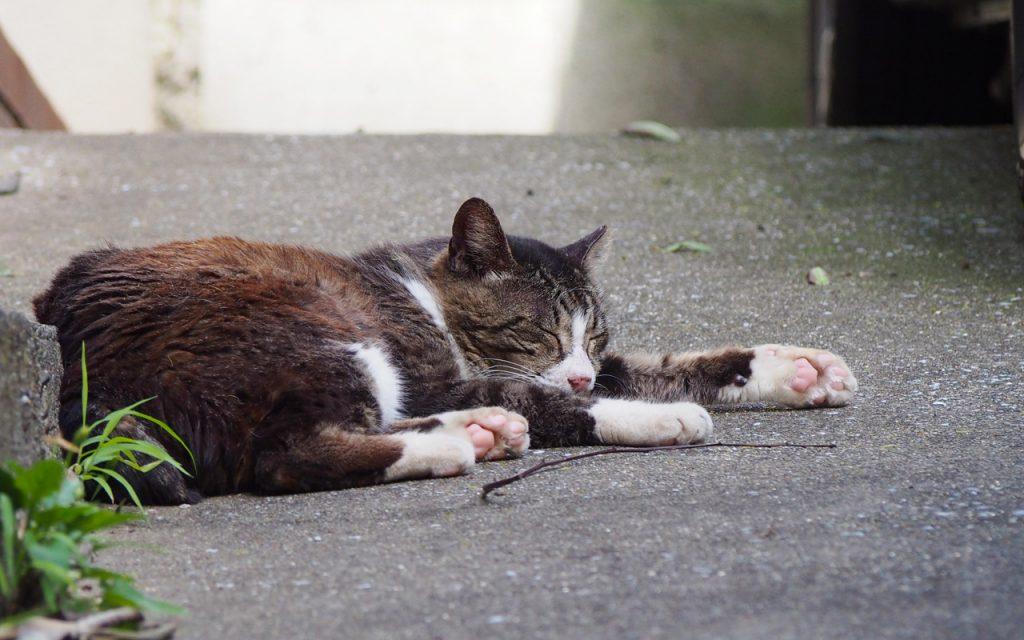 carol sleeping with cute pink pawpad