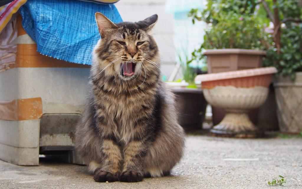 Ranpo Yawn