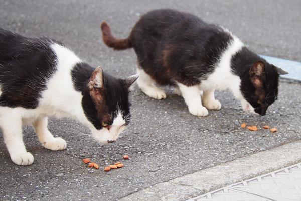 食べる テルマとコテ