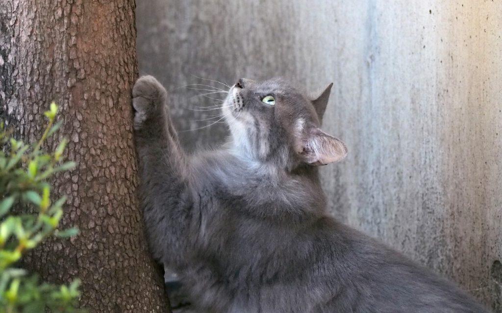 mafu watching top of tree