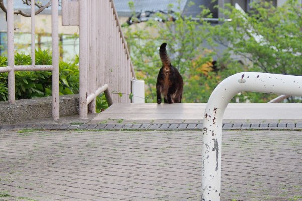 階段を下りるコイキー