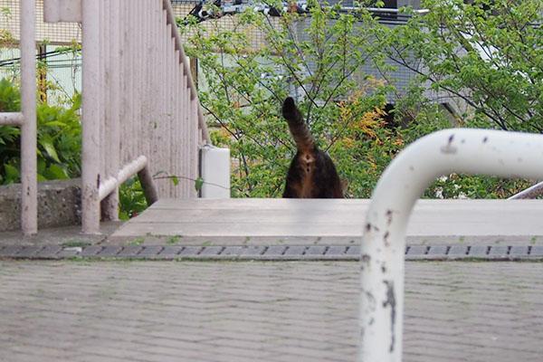 階段を下りる コイキー2