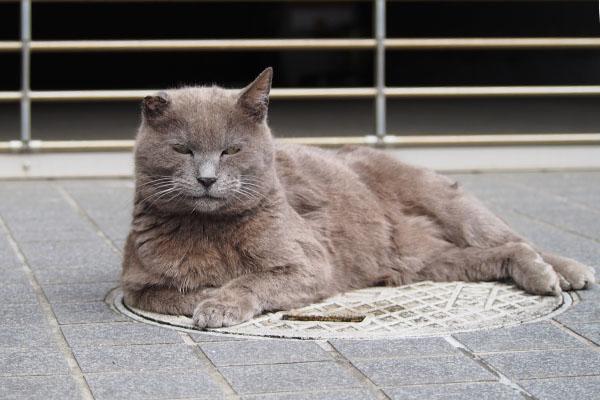 ロシグレ 猫転送満足