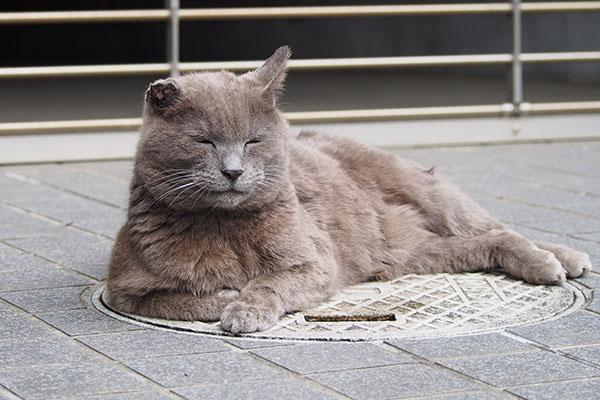 ロシグレ 猫転送1