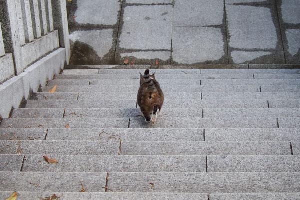 雫に先導され階段を下りる