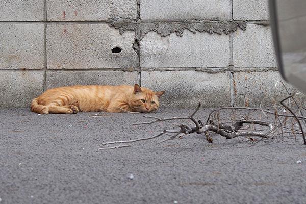 塀沿いに寝ていたトト