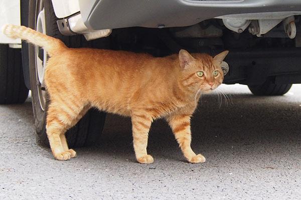 車の下 かわいいトト