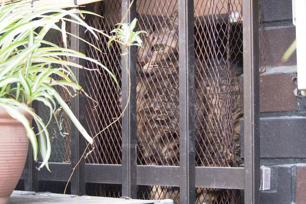 らんぽ君の家から見てる猫