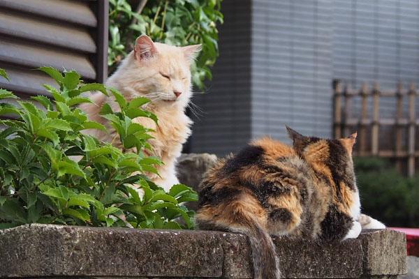 ナリコとオトワ ズーム