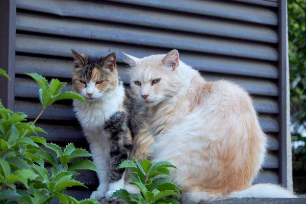 夫婦みたいなナリコとオトワ