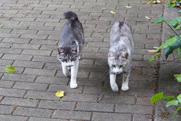 スンスンくる兄弟猫