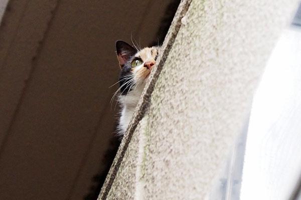 遠くを見ている リコ