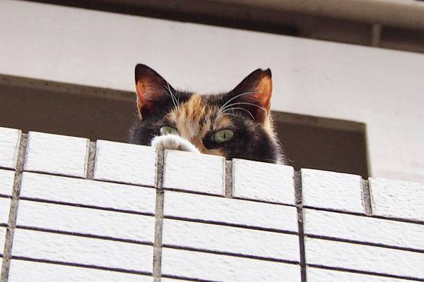 riko peeping fm 2nd floor