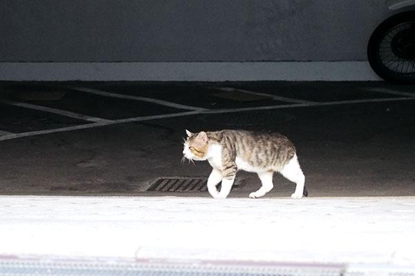 マンションの地下駐車場を潜り抜けるキックス