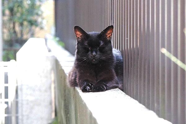 アズマ 宇宙猫的な