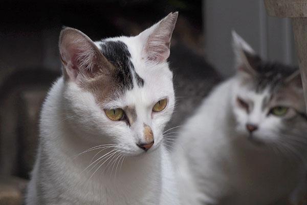 母猫不信に陥るオーロラ