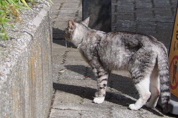 猫通過 トワ