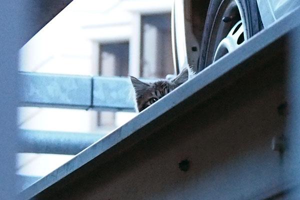 松邸前 仔猫チラ見え
