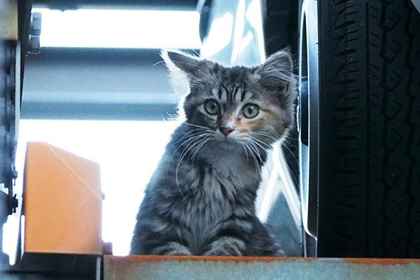 サーヤをずっと見ている仔猫