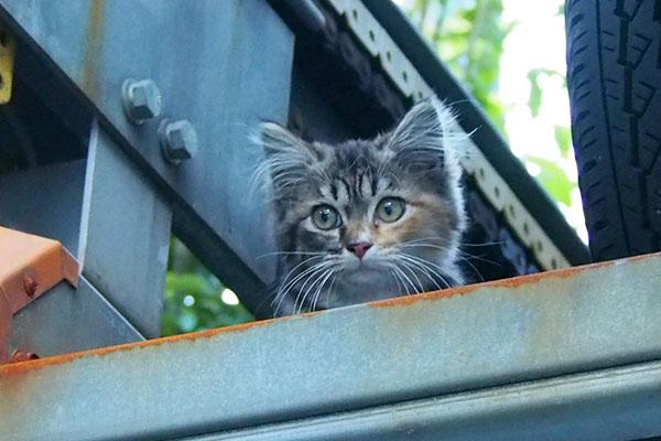 サーヤを見つめていた仔猫