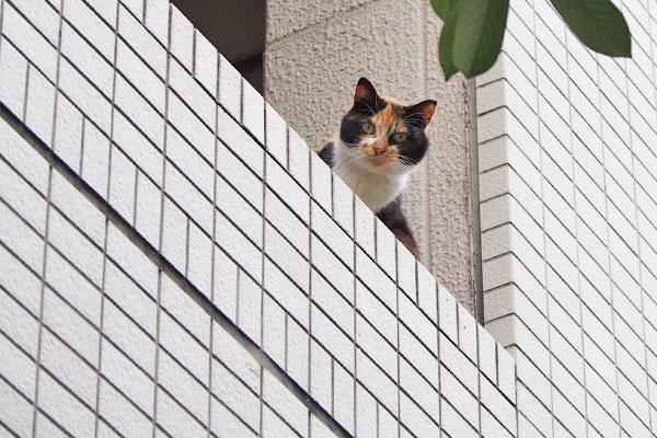 riko watching me