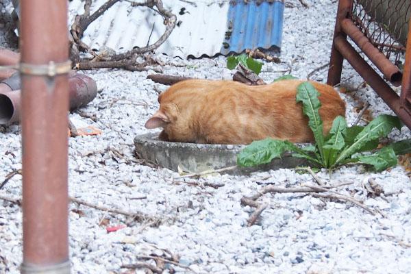 お昼寝中のトト 愛おしい