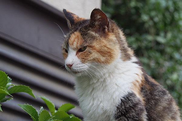 神妙な顔で待つ オトワ
