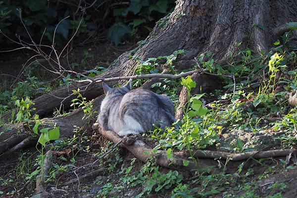 木の根元に クロム