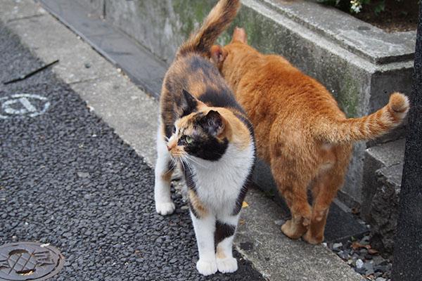 歩道に出て来て2 リコとカブ