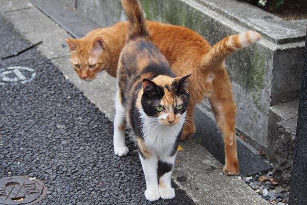 歩道に出て来て3 リコとカブ