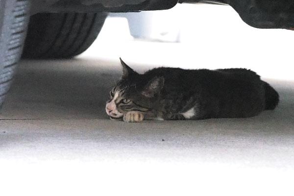 車の下で寝ていたキャロル