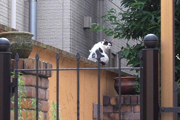 塀の上にモケモケ坊