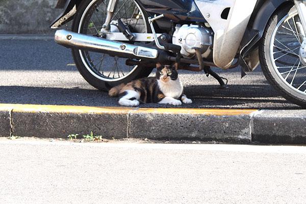 リコ バイクの下