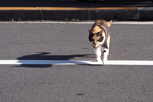 リコ 道路横断中 影と