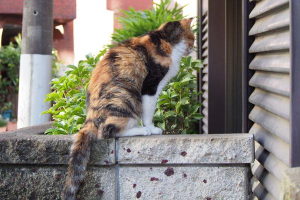 食事が出て来る窓を見ている オトワ
