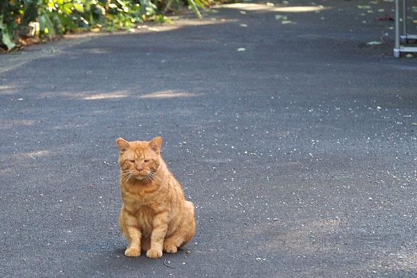 コルレが行儀よくお座りして見ている