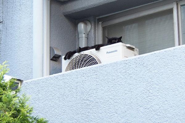 撮りにくい位置の黒猫さん