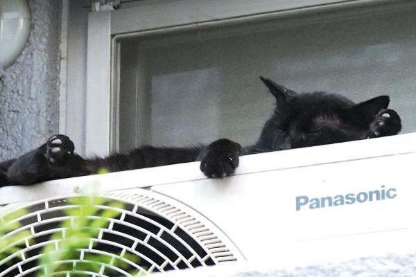 黒猫さんズーム お手て