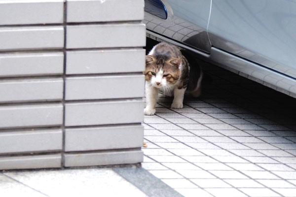 車の下からにゅいん アル