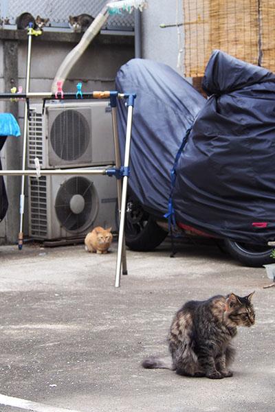 縦写真 4猫2