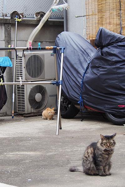 縦写真 4猫
