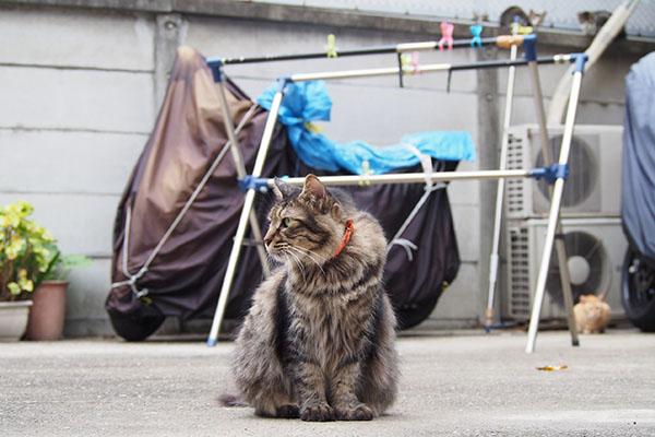 横向くらんぽ 背後3猫