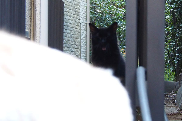 宇宙猫発見 アズマ