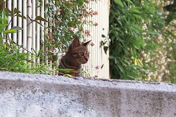 コトラ 遠くを見る