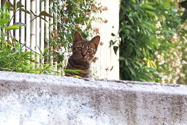 コトラ こちらを見る