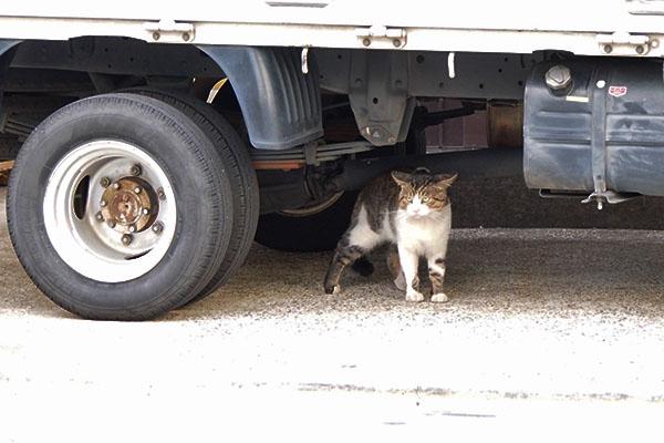 トラックの下 イカ耳で レオ太