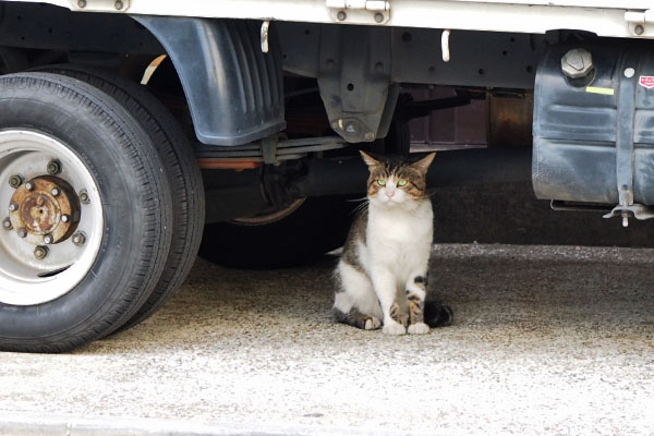 reota sitting under the truck
