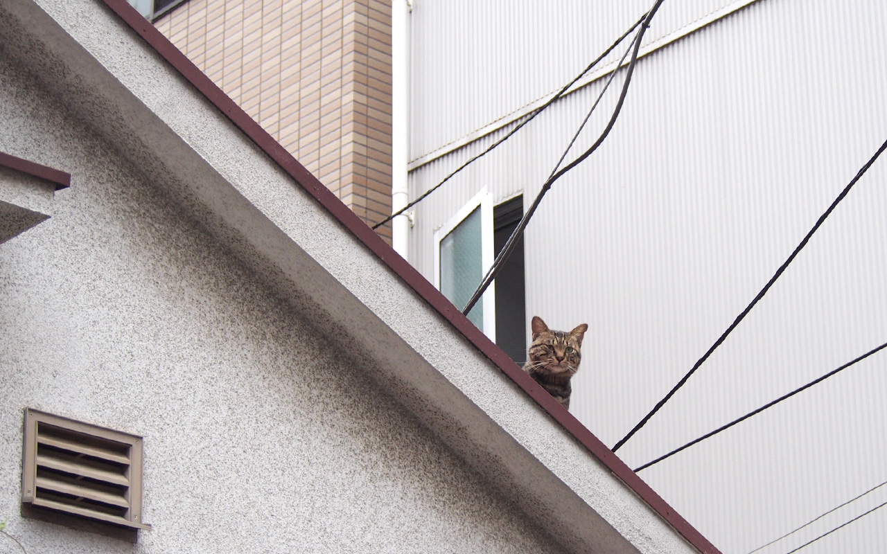 Keybou on the roof