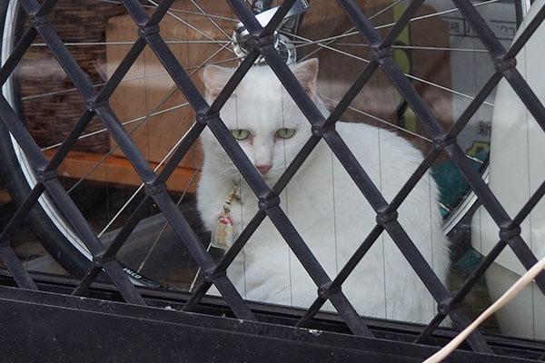 白猫さん 壁の向こう
